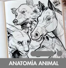 anatomiaanimal