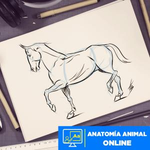Anatomía animal online Imagen