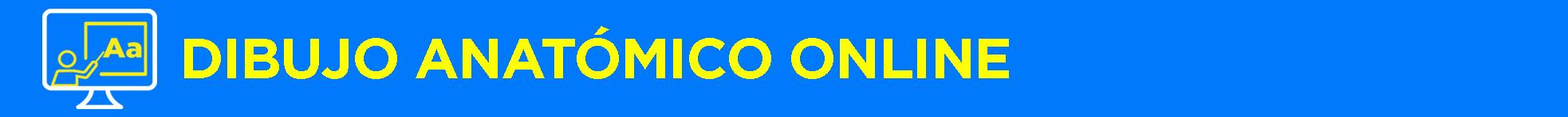 Banner título Dibujo Anatómico Online